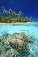 brain coral @ secret beach 2.jpg