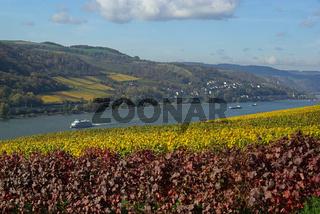 Rhein 03