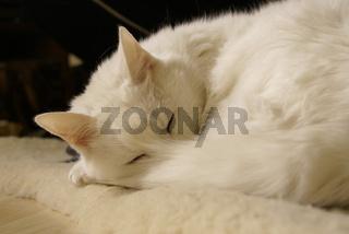 Cats-Mylady002