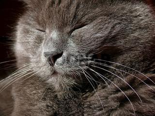 Hauskatzenportrait