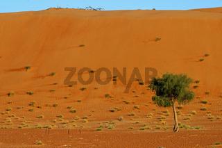 In den Wahiba Sands Wüste, Oman