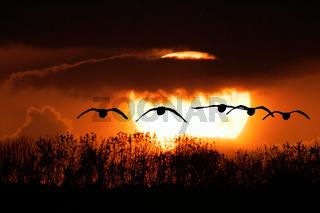 Vogelflug