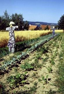 Vogelscheuche, Scarecrow, Feldarbeiter