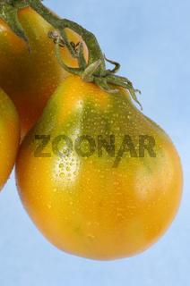 Tomato, Beuteltomate aus El Salvador, Solanum lycopersicum,  Tomaten