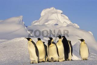 Kaiserpinguin, Emporer Penguin and chick, Dawnson-Lambton Glacier, Antarktis, kaiserpinguine