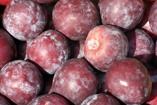 Plums | Pflaumen (Prunus)