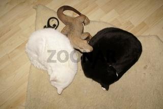 Cats-YingYang