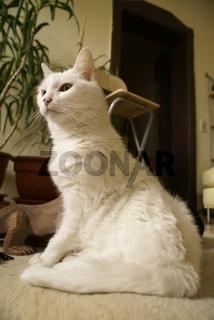 Cats-Mylady005