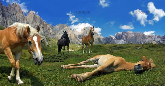 Pferdehimmel Panorama
