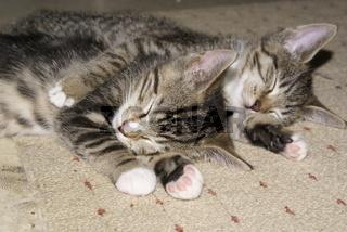 Cats-katzenkind022