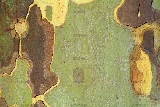 Tree bark in autumn | Baumrinde im Herbst