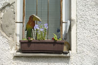 Fenster mit Blumenkasten und Patina, Window boxes