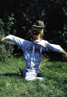 Vogelscheuche, Scarecrow, Zorro