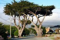 Half Moon Bay Westküste USA Kalifornien