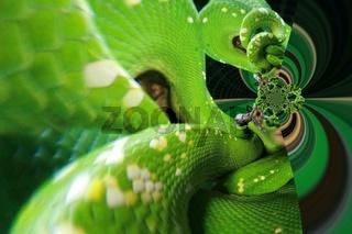 Schlangenmuster