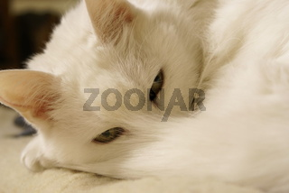 Cats-Mylady003