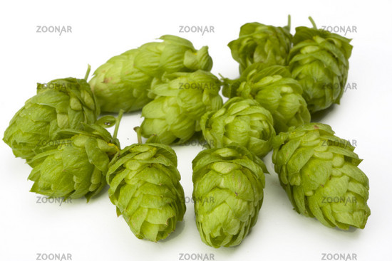 fresh green hop fruit detail isolated on white