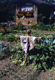 Vogelscheuche, Scarecrow