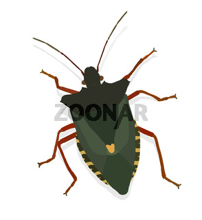 Vector bug | Käfer (Vector)