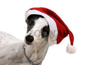 Kokai mit Weihnachtsmütze 3