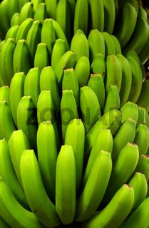 Bananenstaude auf Madeira