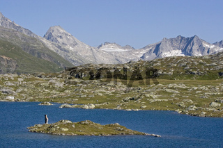 Grimselpassee/ Little lake in Switzerland