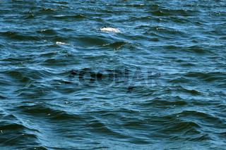 Die See