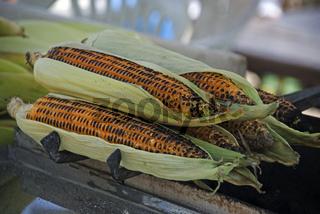 Türkei-Mais
