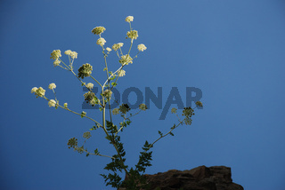 Einsame Pflanze