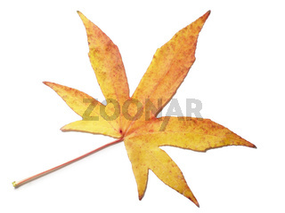 Herbstblatt - Autumn leaf