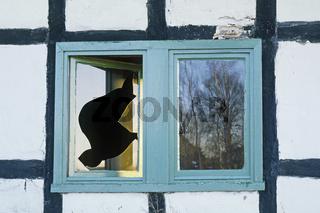 leerstehendes Haus, Fensterscheiben
