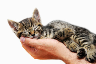 Kleines Kätzchen auf dem Arm
