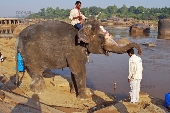 Elefant segnet Inder am Tugabhadra Fluss in Hampi, Südindien, Asien