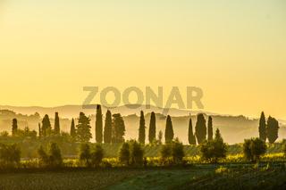 Dawn at  Tuscany Vineyard
