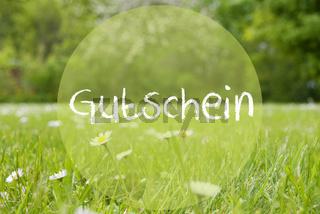 Gras Meadow, Daisy Flowers, Gutschein Means Voucher