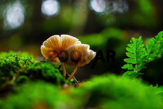 Pilz neben Farn