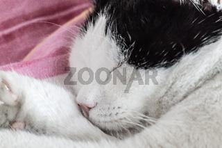 Katze schläft tief