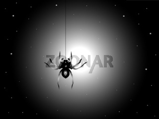 Night and spider