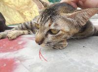 Katze lässt sich wohlig Kraulen