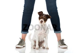 Hund sitzt zwischen Beinen