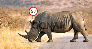 Breitmaulnashorn am Verkehrsschild im Kruger Nationalpark, Südafrika, white rhinoceros at a traffic sign, South Africa