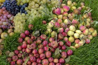 Früchte auf einer Wiese