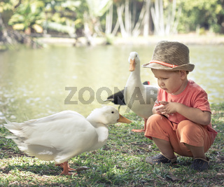 Boy and geese