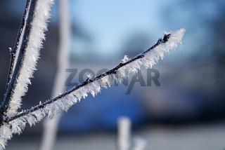 Eisblumen an Pflanze im Winter Makrofoto - mcrao Photography