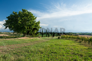 Panoramic view of vineyard and fields