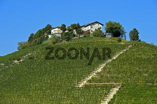 Weinberge der Nebbiolo Traube für Barbaresco Rotwein im Anbaugebiet Barbaresco Montestefano, Italien