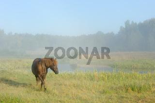 Horse in a fog
