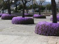 Frühling im Parc de la Mar - Palma de Mallorca
