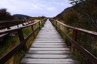 Wooden walkway in park.