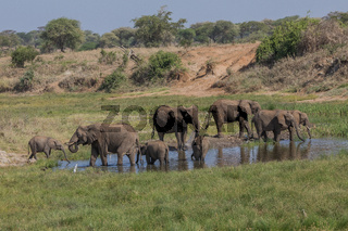 Eelefantenherde im Tarangire Nationalpark